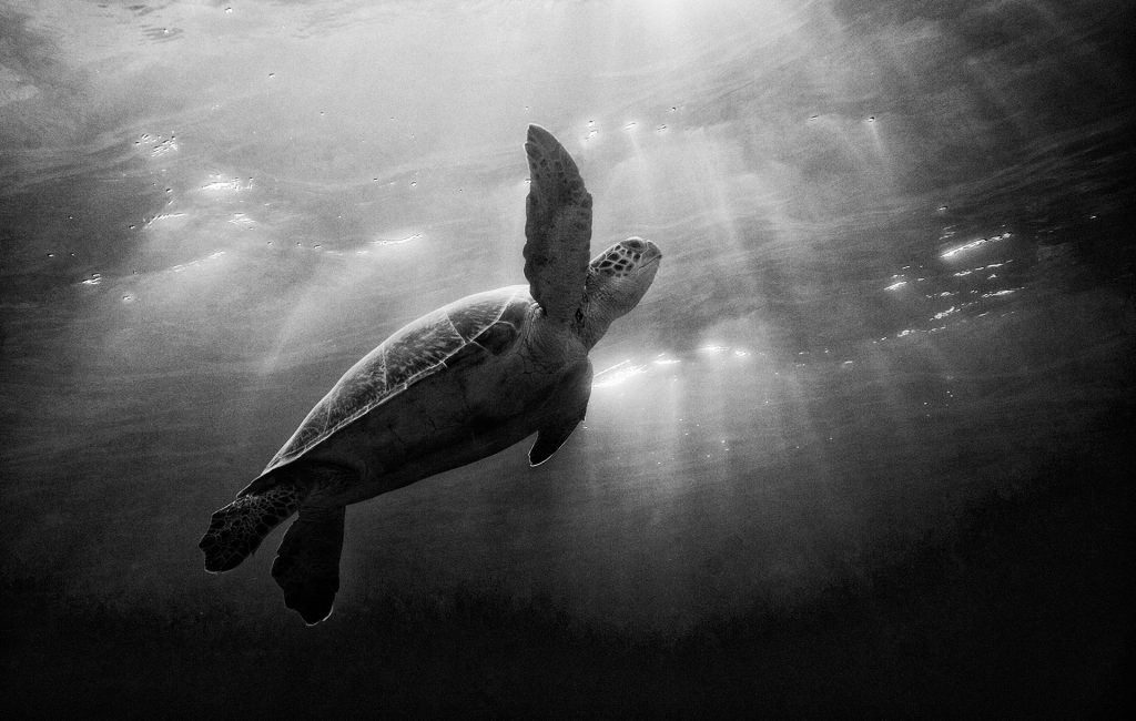 Turtle Sky - Kevin Dodge Photography